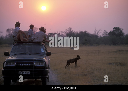 Botswana, Moremi Game Reserve, Tourists on safari watch African Wild Dog (Lycaon pictus) playing in dry grass near - Stock Photo
