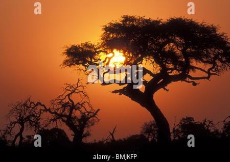 Botswana, Chobe National Park, Setting sun silhouettes trees near water hole in Savuti Marsh at sunset - Stock Photo