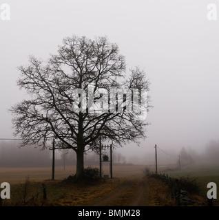 Scandinavian Peninsula, Sweden, Skane, View of oak tree in misty landscape - Stock Photo