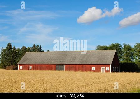 Scandinavian Peninsula, Sweden, Ostergotland, Barn in field - Stock Photo