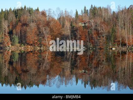 Scandinavia, Sweden, Vastergotland, Trees reflecting in lake - Stock Photo