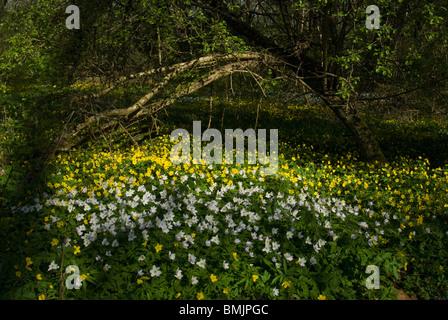 Scandinavia, Sweden, Skane, Oland, View of flowerbed - Stock Photo