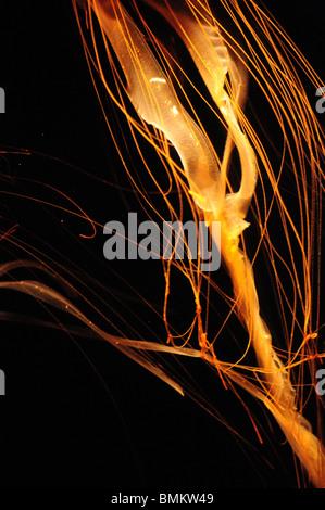 close up macro of jellyfish tentacle under blacklight - Stock Photo