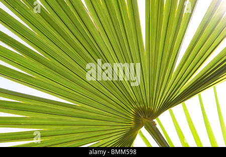 green palm leaf - Stock Photo
