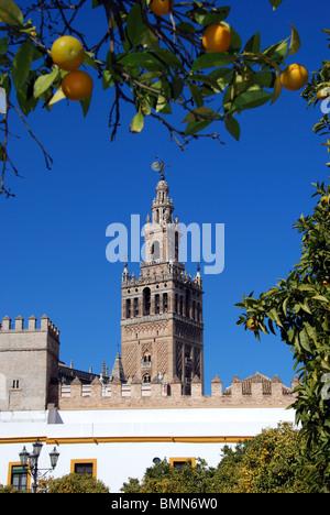 Cathedral and Giralda Tower (Catedral de Santa Maria de la Sede), Seville, Seville Province, Andalucia, Spain, Western - Stock Photo