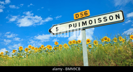 Sunflower Field, Puimoisson Road Sign, Provence, France - Stock Photo