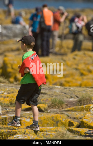 Boy walking on lichen covered rocks Farne Islands, Northumberland Coast, England, UK, Europe, June - Stock Photo