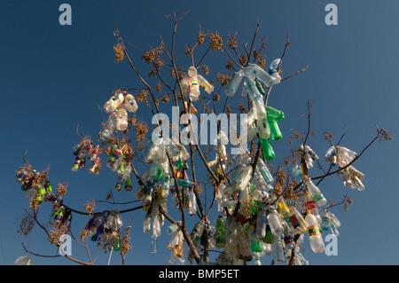 Empty plastic bottles over tree - Stock Photo