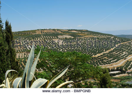 View of surrounding countryside and olive groves seen from the Plaza Santa Lucia, Ubeda, Jaen Province, Andalucia, - Stock Photo
