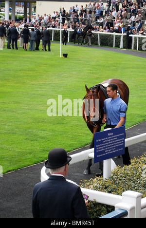 A man in bowler watching a horse at Ascot racecourse before the race (parade ring).  Moss Bros Day, 28 April 2010. - Stock Photo