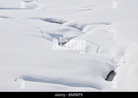 Tracks in the snow, Yellowstone - Stock Photo