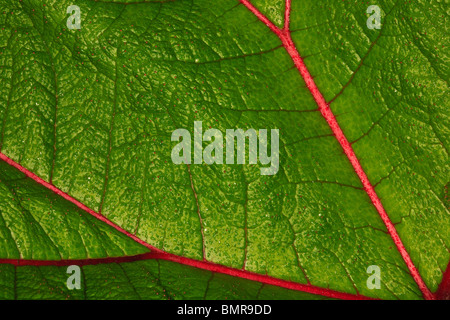 Leaf details on the cloudforest of La Amistad national park, Chiriqui province, Republic of Panama. - Stock Photo