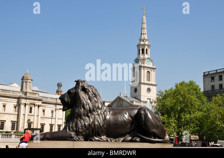 Lion at base of Nelson's Column, Trafalgar Square, London with St Martin in the Fields Church behind - Stock Photo