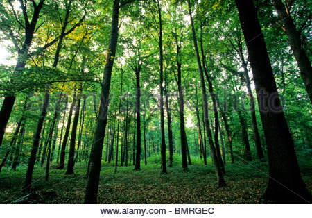 deciduous forest in spring, Germany - Stock Photo
