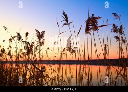 Willmar, Minnesota, United States Of America;; Tall Grass Along The Shoreline At Sunset - Stock Photo