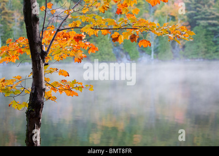 Morning light brings autumn colors to life on the shores of Bubble Pond. Acadia National Park, Maine, USA. - Stock Photo