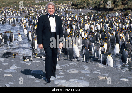 A visitor to Antarctica dresses appropriately in a tuxedo to visit the King Penguins at Gold Harbor on South Georgia - Stock Photo