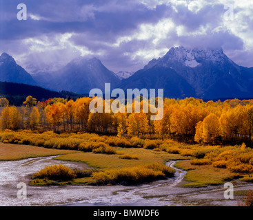 Grand Teton National Park, WY The sun's rays illuminates an aspen grove at Oxbow Bend with storm clouds over the - Stock Photo