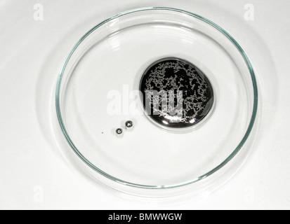 Mercury, small amount in a petri dish, studio picture. - Stock Photo