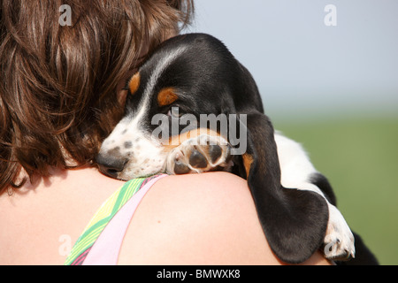 Basset Hound (Canis lupus f. familiaris), woman holding an 8 weeks old puppy on the arm, Germany - Stock Photo