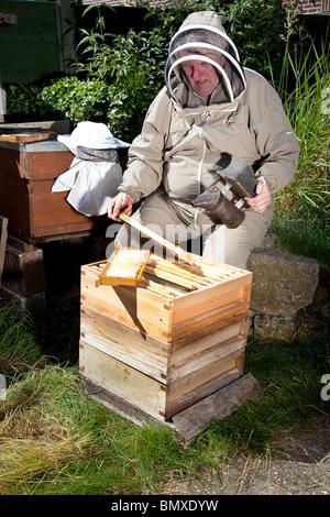 Bee keeper working on a beehive in suburban garden in UK