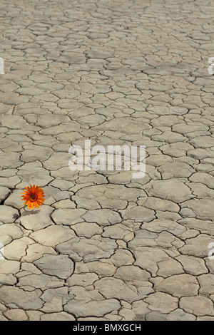 Flower growing in desert landscape - Stock Photo