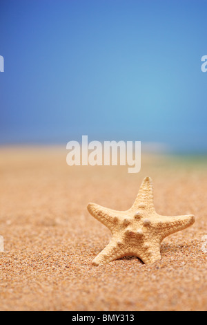 A sea star on a sandy beach against blue sky - Stock Photo