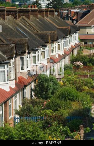 Terraced Houses front gardens suburban south London UK - Stock Photo
