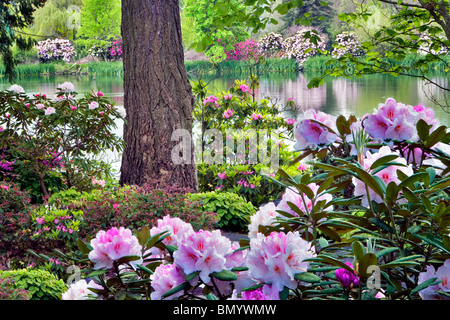 Rhododendrons in bloom with pond at Crystal Springs Rhododendron Gardens, Oregon - Stock Photo