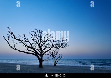 Dead Tree at Dusk at the Boneyard on Botany Bay on Edisto Island in Charleston County, South Carolina - Stock Photo