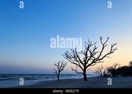 Dead Tree at Dusk at the Boneyard on Botany Bay on Edisto Island in Charleston County, Souh Carolina - Stock Photo