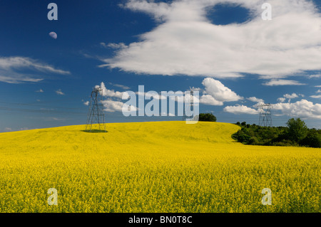 Field of yellow rapeseed crop with moon and hydro towers against a blue sky Oak Ridges Moraine Ontario