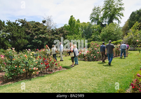 Beautiful Rose Garden at the Huntington Library and Botanical Gardens. - Stock Photo