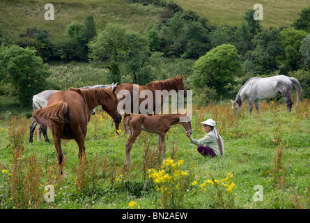 Horse Whisperer, County Sligo, Ireland. - Stock Photo