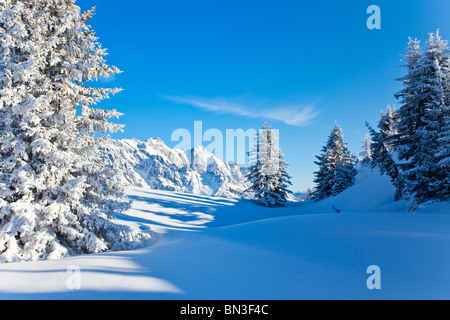 Snow-covered spruce trees, Berchtesgaden Alps, Muehlbach, Austria - Stock Photo