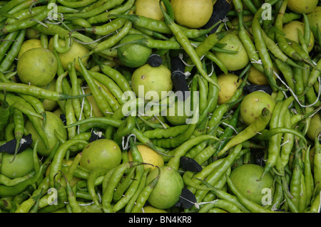 Belief ;Green Chili ; lemon and charcoal tied together  to protect from evil sight ; India - Stock Photo
