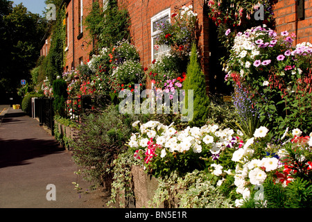 England, Cheshire, Stockport, Cheadle, Lime Grove, flowers in terraced house gardens - Stock Photo