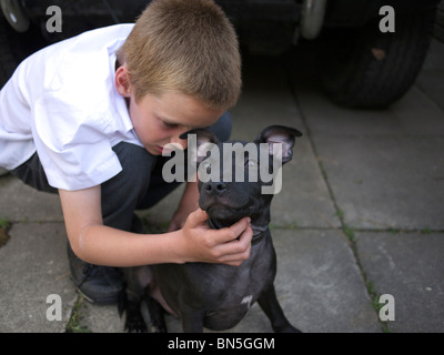 Young boy with Staffordshire Bull Terrier, England, UK. - Stock Photo