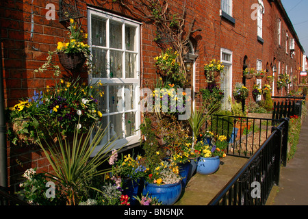 UK, England, Cheshire, Stockport, Cheadle, Lime Grove, Spring Flowers in terraced house gardens - Stock Photo