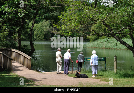 Cannop Ponds, Forest of Dean, Gloucestershire, England, UK - Stock Photo