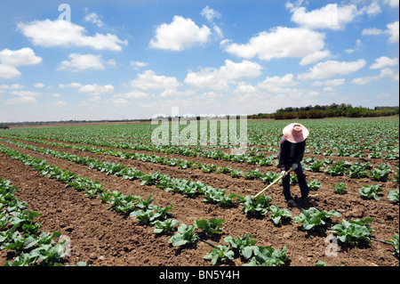 Migrant Thai Workers in Israell - Stock Photo