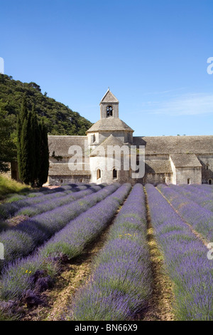 Lavender fields at the Abbaye de Senanque at Gordes in Provence France - Stock Photo