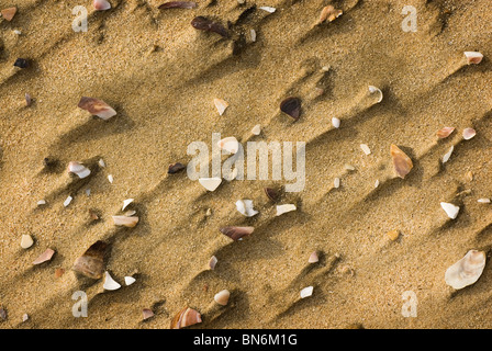Aerial close-up of a section of beach with broken shells on it. St. Lucia, Kwazulu-Natal, South Africa - Stock Photo