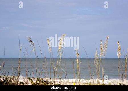 view of the sea and sky through sea grass on a summer morning, bonita beach, florida - Stock Photo