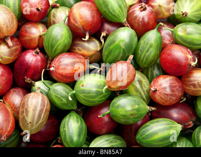 Red and green gooseberry fruit closeup background - Stock Photo