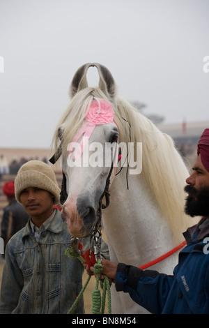 Fair Maghi Mela Punjab Mukstar India sikh horse - Stock Photo