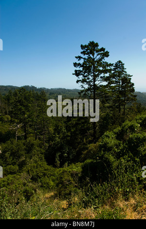 Forest at Point Reyes National Seashore near San Francisco, California. - Stock Photo