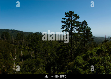 Forest landscape at Point Reyes National Seashore near San Francisco CA California with mix of pine and doug fir - Stock Photo