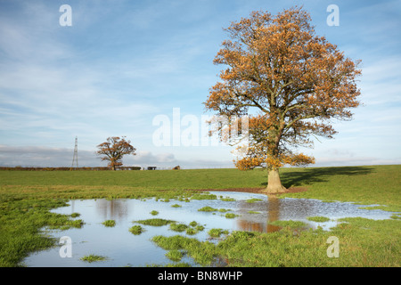 Single Autumn oak tree standing in a flooded field, Herefordshire, England, UK - Stock Photo