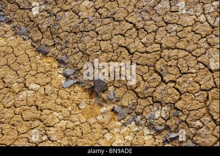 Cracked dry ground texture - background - Stock Photo